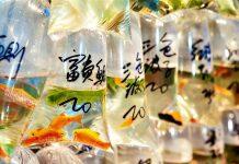 Chợ cá đa dạng của Tung Choi