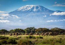Kinh nghiệm du lịch Tanzania