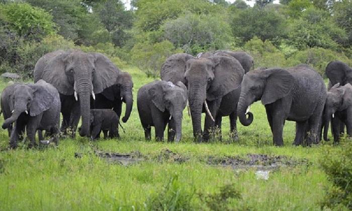 Công viên quốc gia Hwange