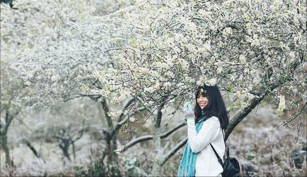 Du lịch Mộc Châu mùa xuân