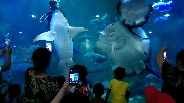 Du lịch Thủy cung Trí Nguyên – Nha Trang điểm đến hấp dẫn mùa hè này