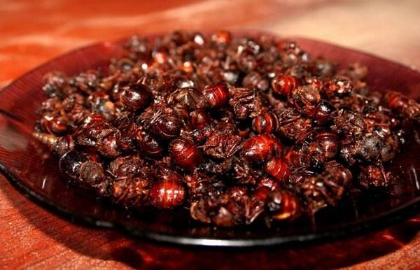 Bánh kiến Hormigas Culonas