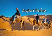 Có thể bạn cần kinh nghiệm đến sa mạc Safari Dubai này!