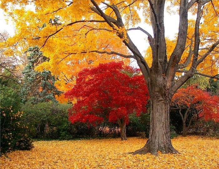 số kinh nghiệm du lịch Hàn Quốc mùa thu