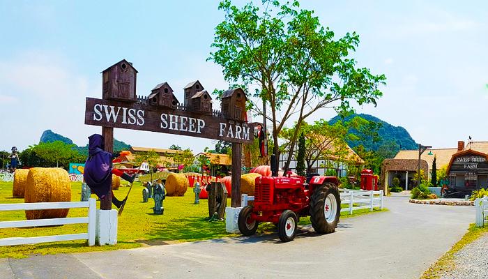 Swiss Sheep Farm tuyệt đẹp và thơ mộng
