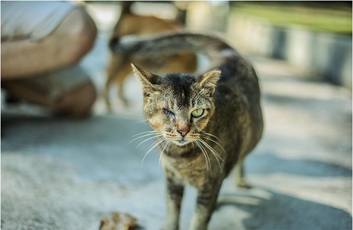 Con mèo cướp biển nổi tiếng trên đảo Lazarus, kinh nghiệm du lịch đảo Lazarus