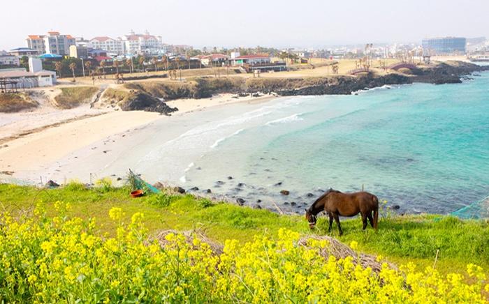 Du lịch trên đảo Jeju, kinh nghiệm du lịch đảo Jeju
