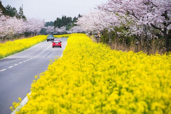 """Kinh nghiệm du lịch đảo Jeju – """"hòn đảo tình yêu"""" tại Hàn Quốc"""