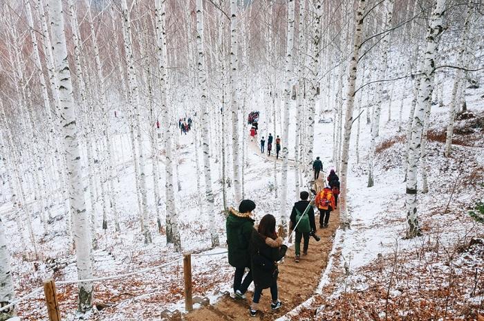 Kinh nghiệm du lịch Hàn Quốc tự túc ngon-bổ-rẻ cho chuyến đi tuyệt vời