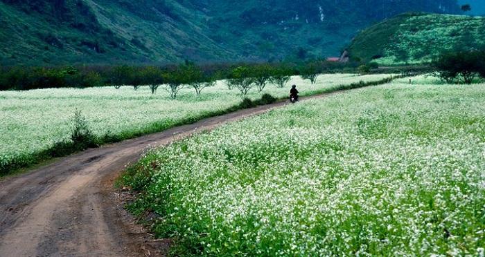 Gợi ý những địa điểm chụp ảnh cưới đẹp tại Mộc Châu dành cho các cặp đôi