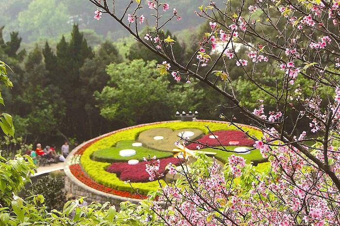 Kinh nghiệm du lịch Dương Minh Sơn – cõi thần tiên của xứ Đài