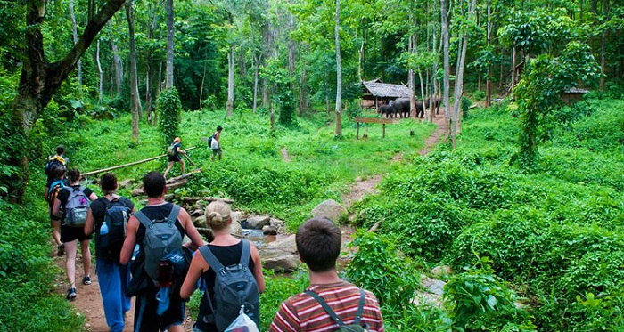 travel experience to Cuc Phuong National Park