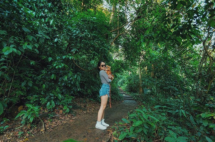 Đi bộ khám phá khu rừng nguyên sinh