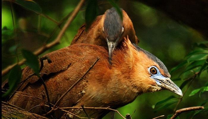 Ngắm nhìn những loài chim rực rỡ sắc màu