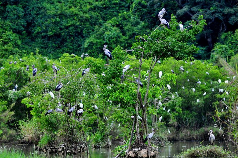 Vườn chim Thung Nham có rất nhiều loài chim đang sinh sống