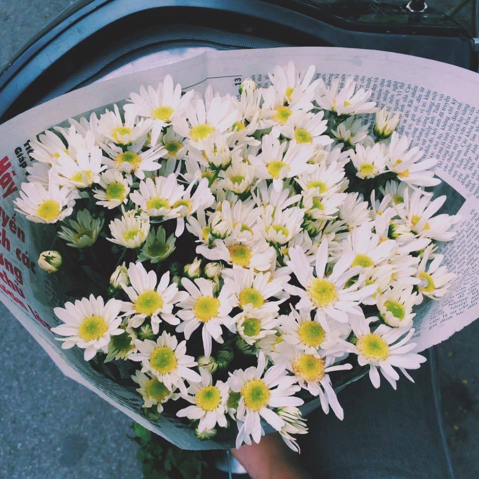 Người Pháp cho rằng việc tặng hoa cúc sẽ đem lại những điều không may mắn