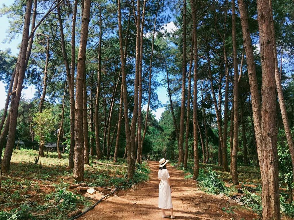 Chụp ảnh sống ảo tại rừng thông Bản Áng