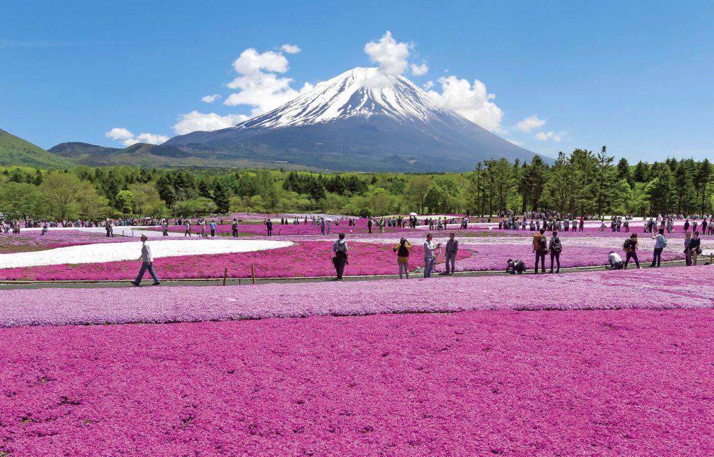 kinh nghiệm du lịch Yamanashi