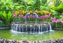 kinh nghiệm tham quan Botanic Garden