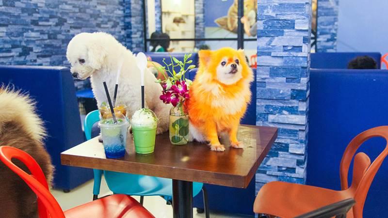 Saito Pet Cafe