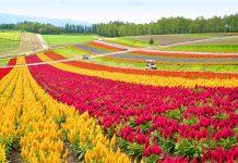 những địa điểm du lịch nổi tiếng tại Hokkaido