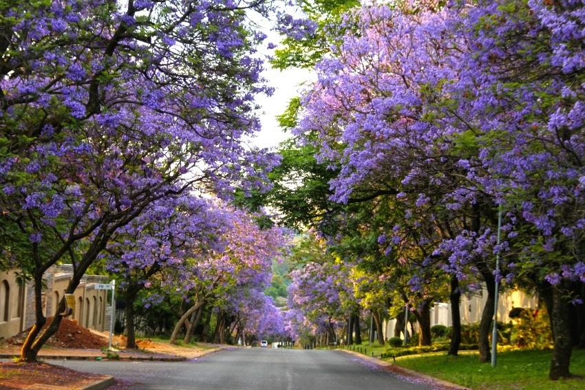 kinh nghiem du lich Pretoria