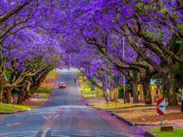 kinh nghiệm du lịch Pretoria