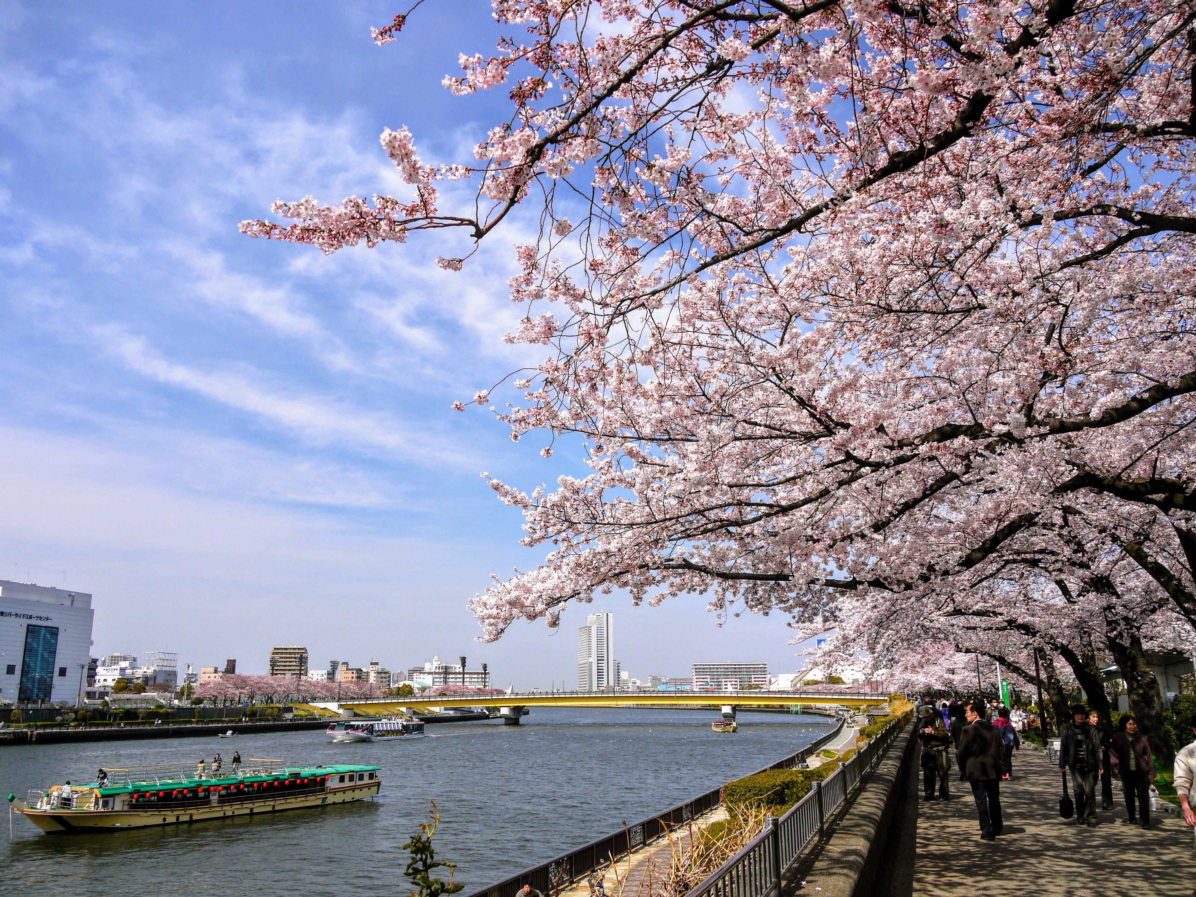 nhung dia diem ngam hoa anh dao dep nhat tai Tokyo